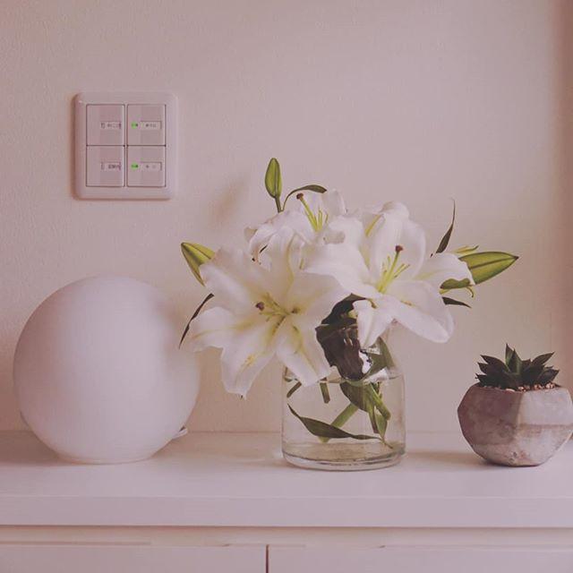 みんなつぼみだったのにポップコーンみたいに毎朝お花が咲いてるよ花瓶は満員#お花のある暮らし #沖縄