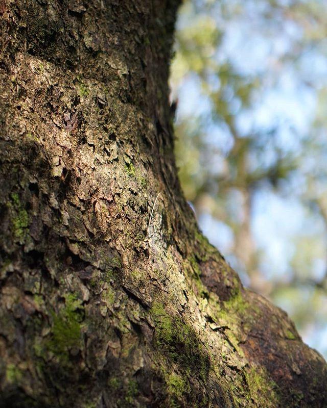 いま何がしたいですか?やりたいことの方向生がすこしは変わってきたような?欲しいものが変わってきたような?でも実はあまり変わらないような?身体の欲求に耳を澄ませて応えられるこころとからだその延長の料理居心地良い空間やってきたことが実を結んだような気もしていたり休み中りりに夢リストを書いてもらったいつかこんな森森の森の中におうちを作りたいそうだジブリの森妄想膨らむよね