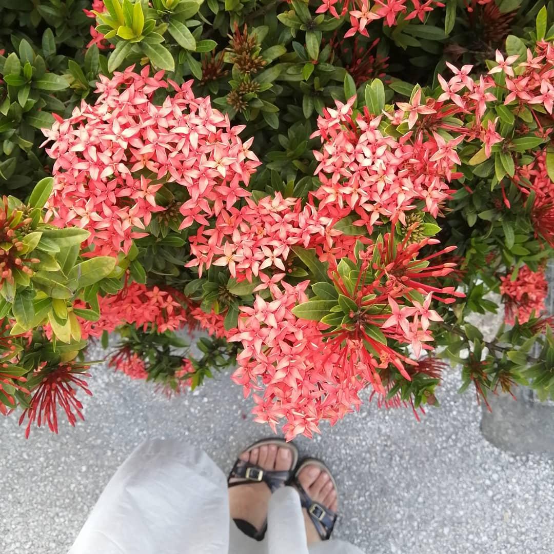 お散歩コースにきれいなお花♫